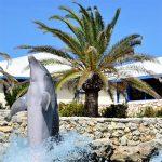 Zwemmen dolfijnen