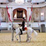 Paarden rijschool
